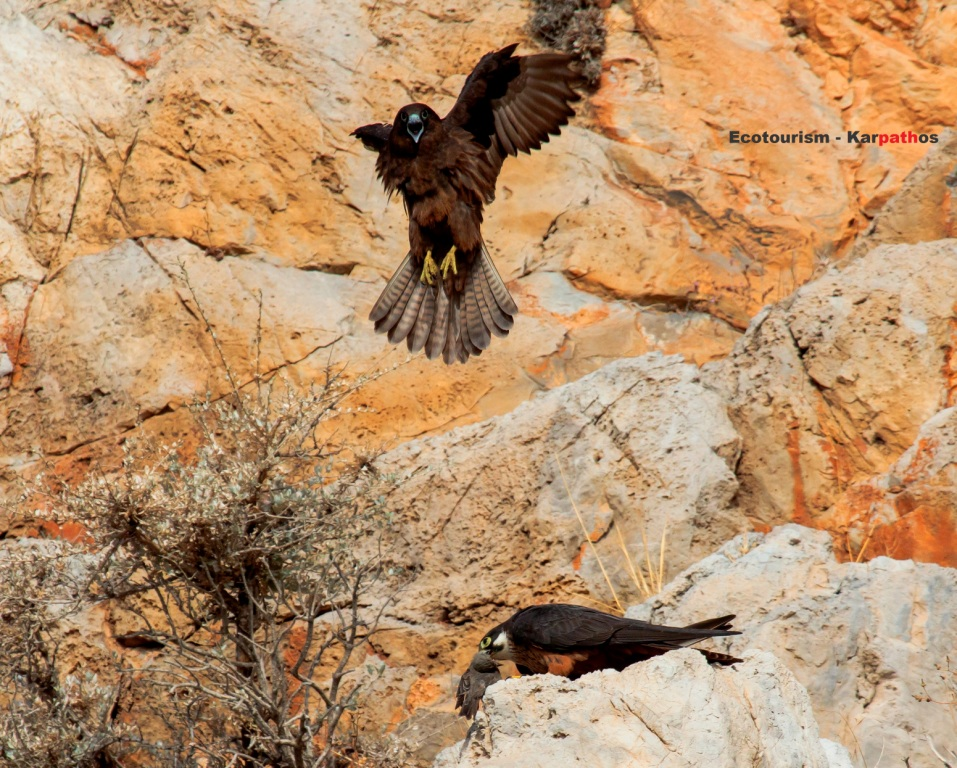 birdwatching karpathos 3