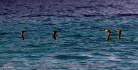 birdwatching karpathos 2